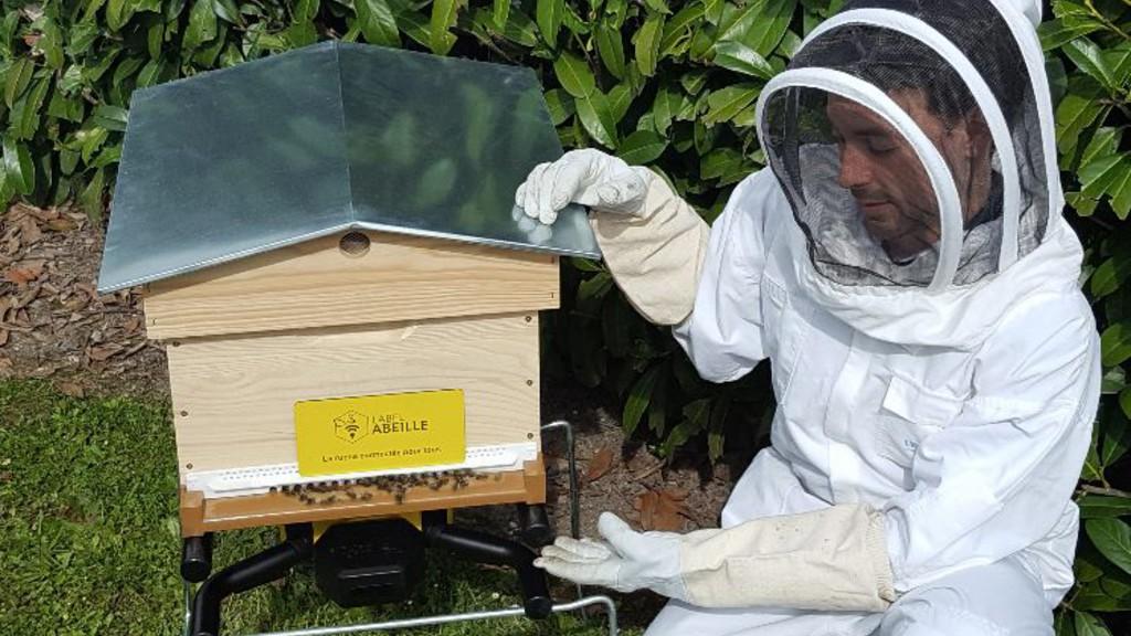 La ruche connectée sauvera-t-elle les abeilles ?