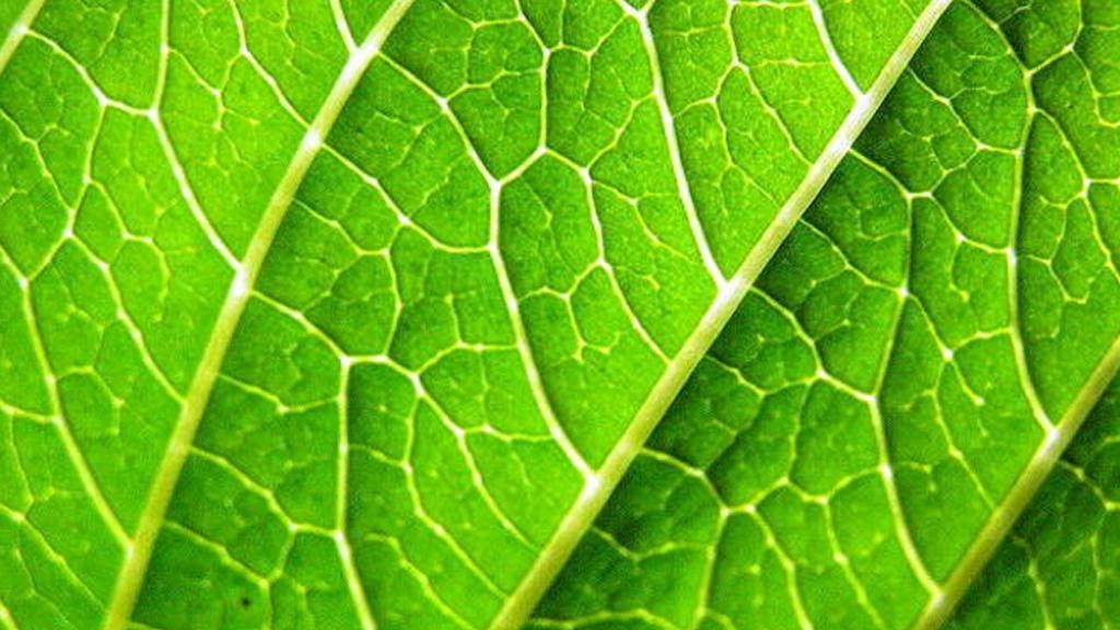 Le biomimétisme, quand la nature inspire la science
