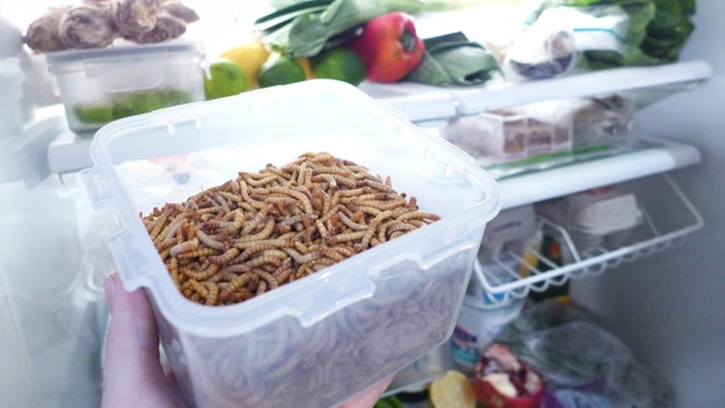 Pour votre dîner, élevez des insectes à la maison