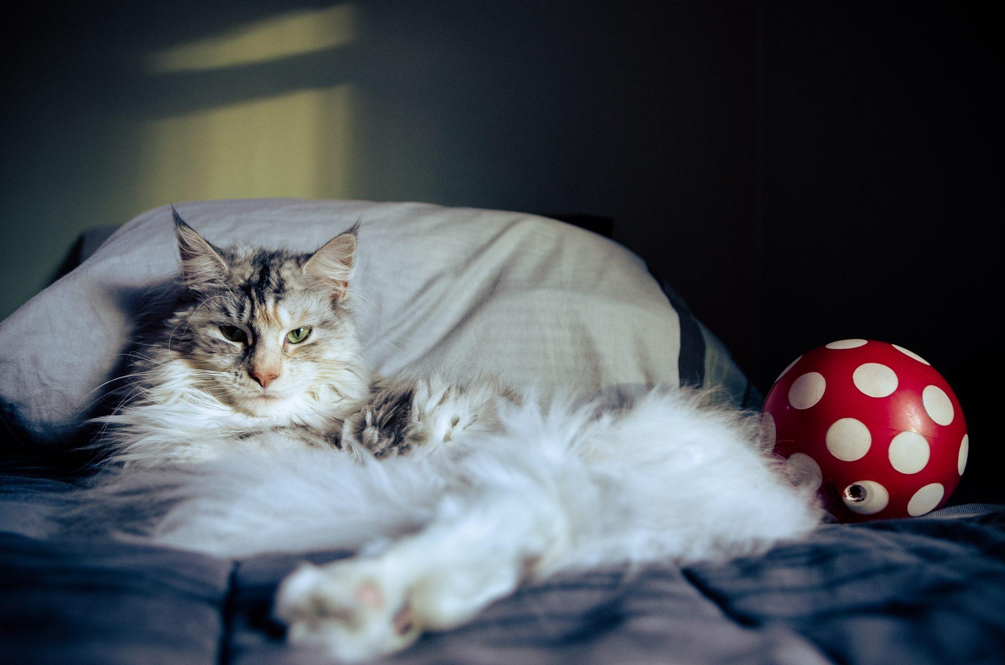 Petective, l'appli qui te permet de retrouver ton chat