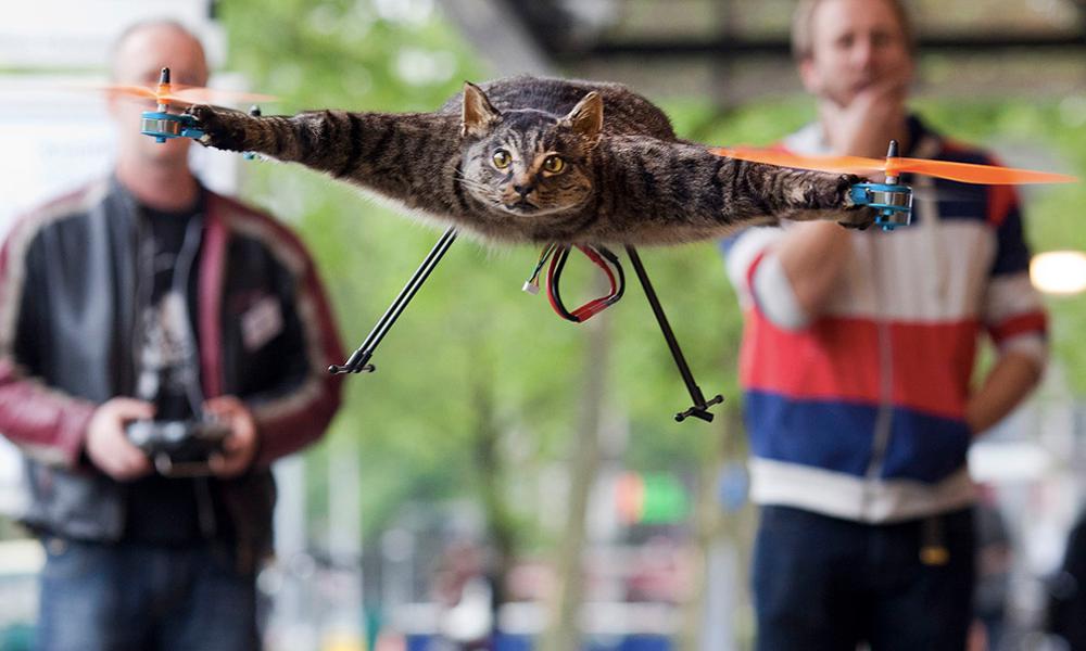 On a retrouvé l'homme qui transforme les chats en drone