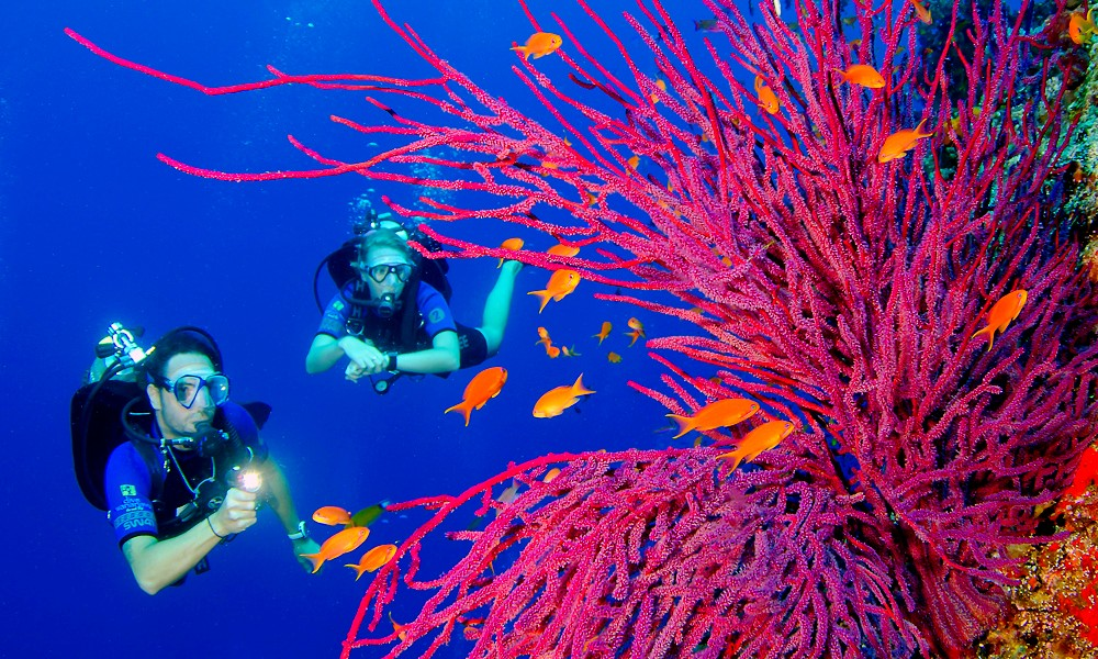 À Marseille, on veut guérir le cancer grâce au corail