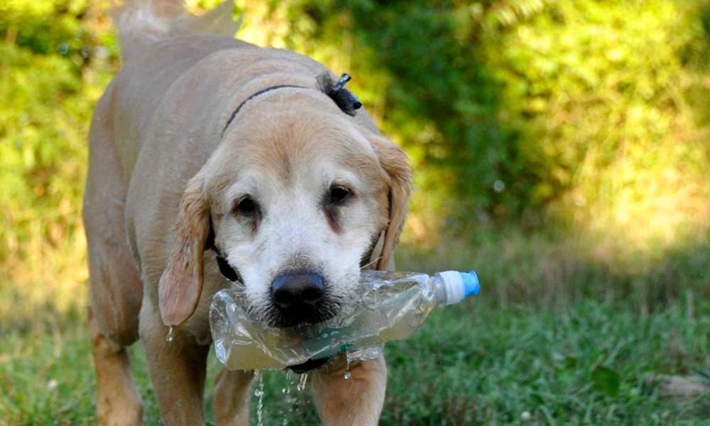 Recycler vos bouteilles pour sauver des animaux