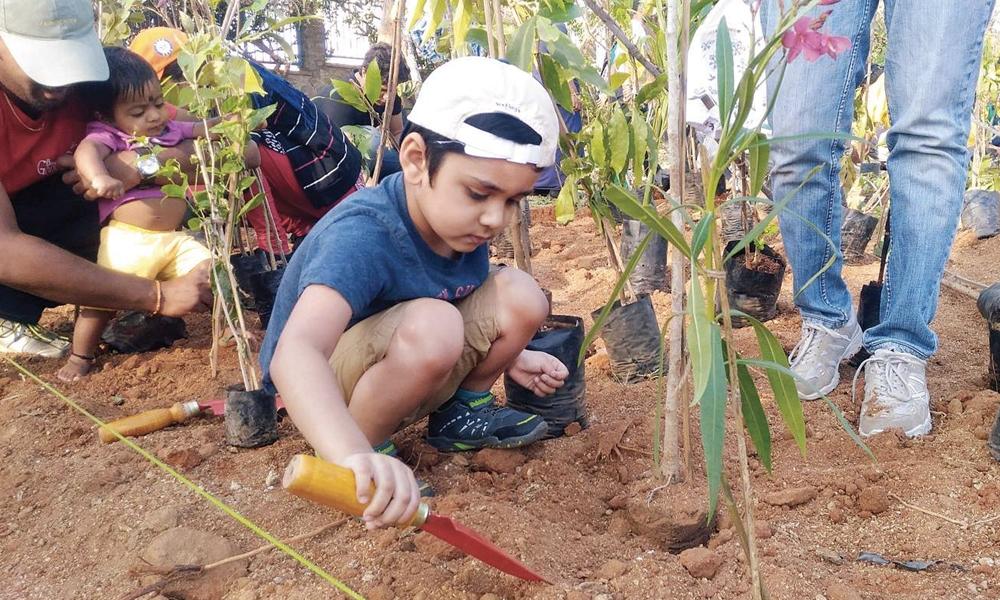 L'Inde plante 66 millions d'arbres en 12 heures: record battu!