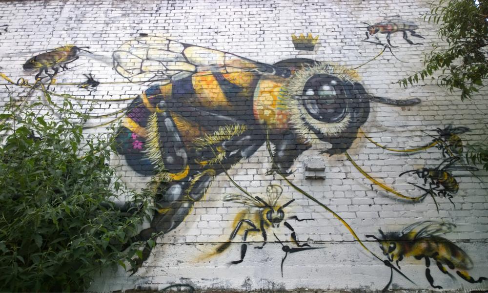 Un Taïwanais invente le premier hôpital pour abeilles