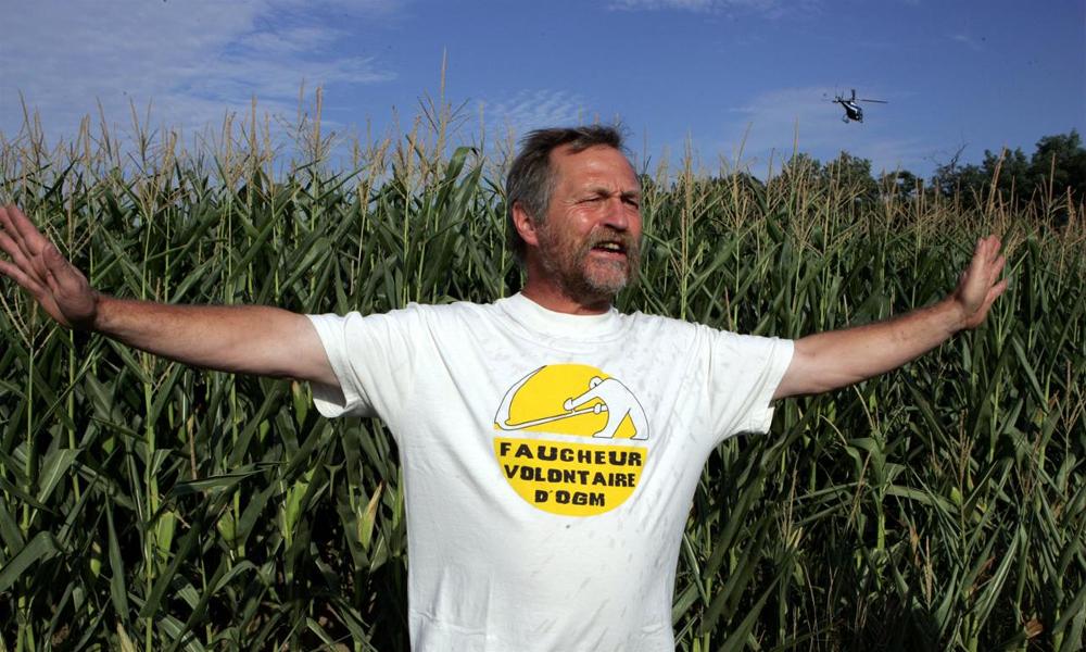 Le maïs OGM serait moins toxique que le bio, des agronomes italiens l'affirment