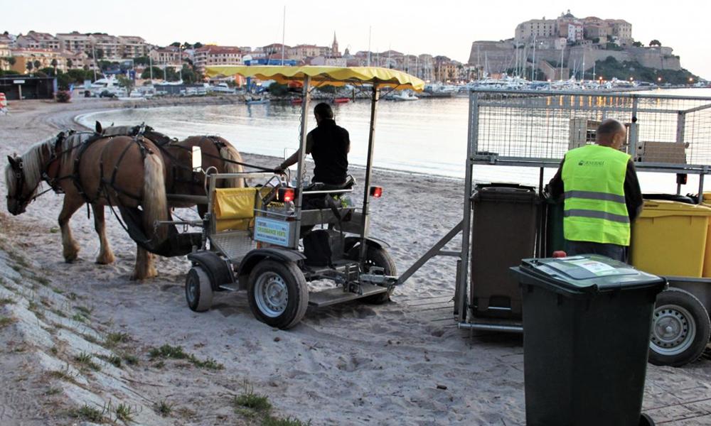 À Calvi, les camions poubelles remplacés par des animaux
