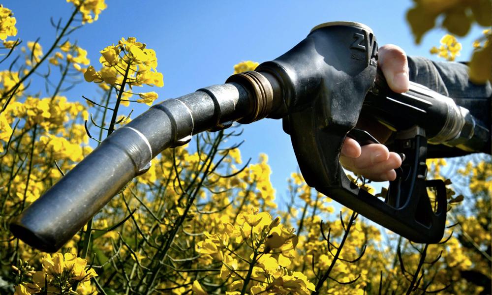 Bye bye diesel: voici l'Oleo100, le premier carburant 100% végétal