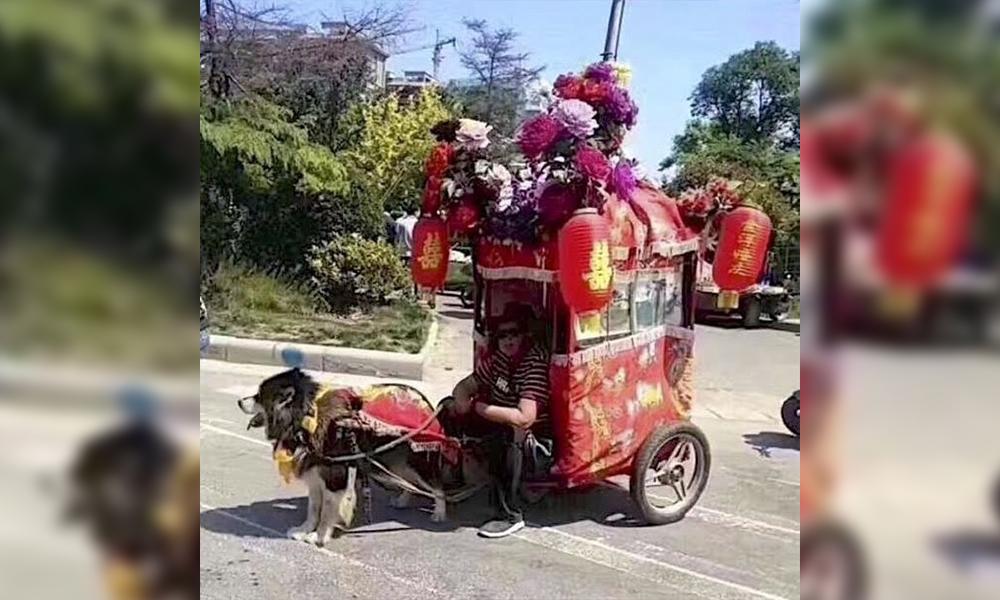 """En Chine, les """"taxis-chiens"""" créent la polémique"""