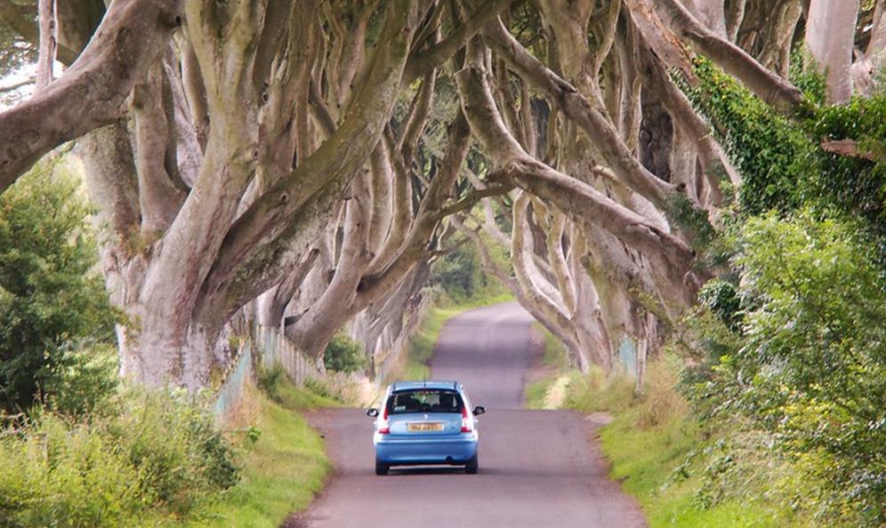 Tout en arbres, ces tunnels vont vous donner envie de prendre la route